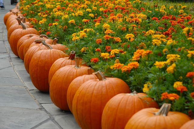 alimentos de otoño